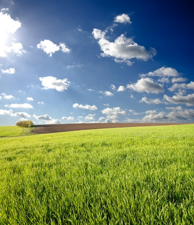 green spring field under deep blue sky Stock Photo - 8949197