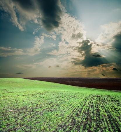 green field Stock Photo - 8949171