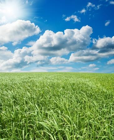 aire puro: campo con pasto verde bajo un cielo azul con sol Foto de archivo