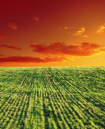 agricultural green field and sunset Stock Photo - 9086289