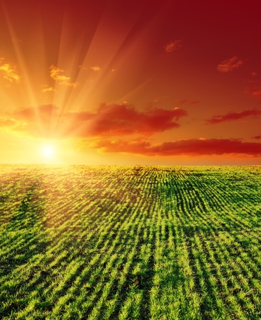agricultural green field and sunset Stock Photo - 9086290