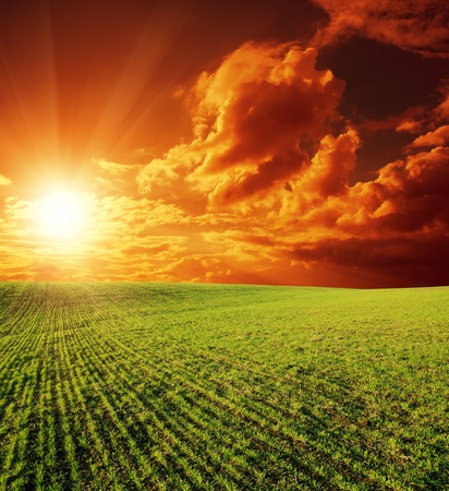 sunrays: agricultural green field and sunset Stock Photo