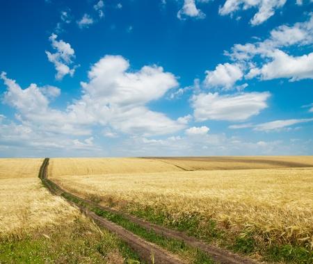 rural road inside field of wheat photo
