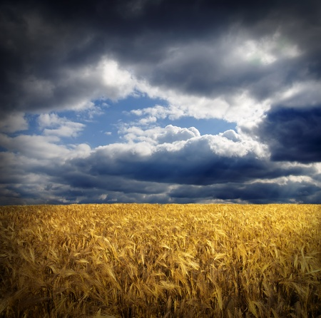 field with gold ears of wheat under hole in dramatic sky photo