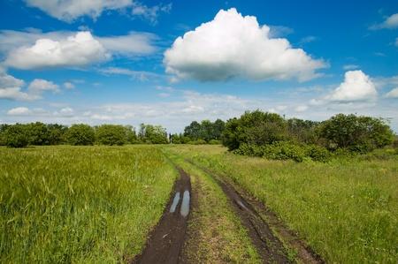 rural road in green field Stock Photo - 9086266