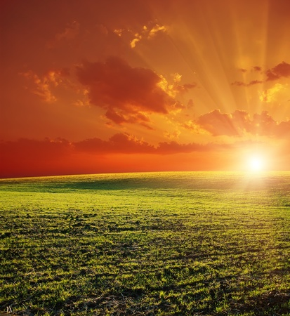 agricultural green field and red sunset Stock Photo - 9185566