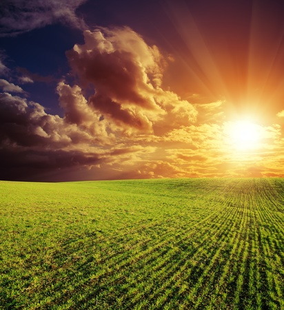 agricultural green field and good red sunset photo