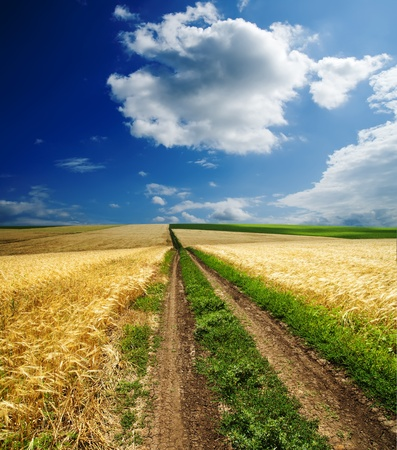 way in golden agricultural field under clouds photo