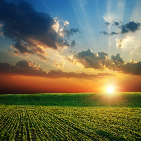 sunset sunrise: agricultural green field and sunset Stock Photo