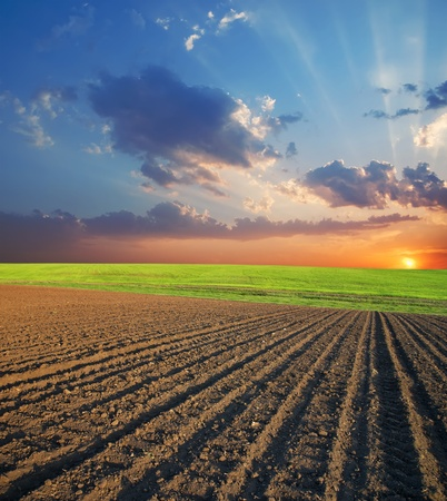 ploughed: agricultural field and sunset