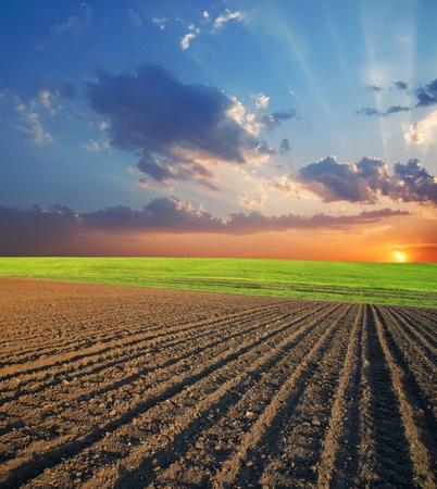 ploegen: gebied van landbouw en zonsondergang Stockfoto