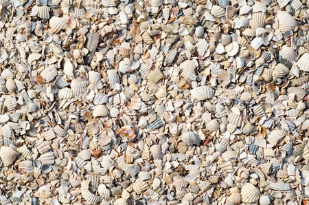 pieses of sea shells background Stock Photo - 9223435