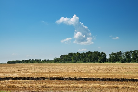windrows on field after harvesting photo