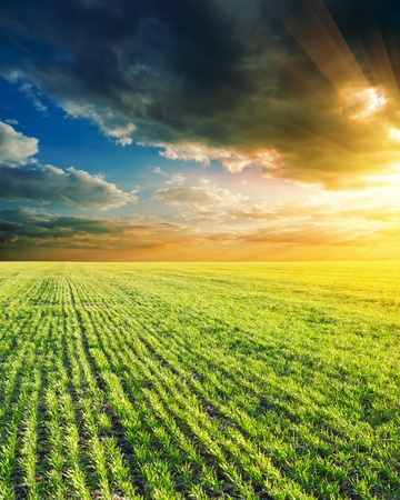 atmosphere: agricultural green field and sunset Stock Photo
