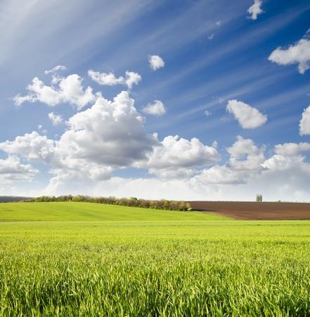 campo verde agr�cola bajo cielo nublado Foto de archivo