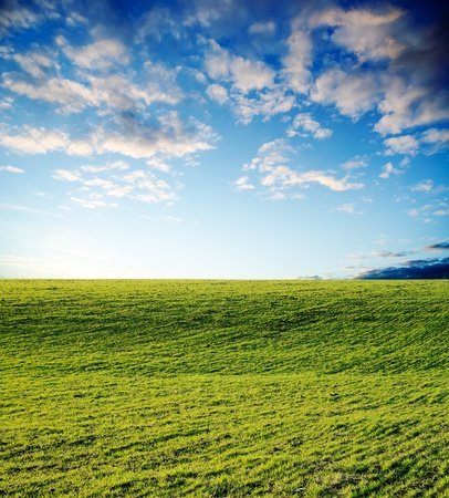 agricultural green field on sunset photo