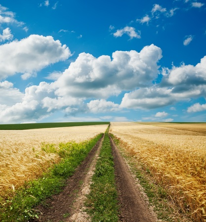 road in golden agricultural field under clouds photo