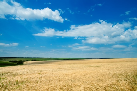 field of wheat under cloudy sky Stock Photo - 9589626