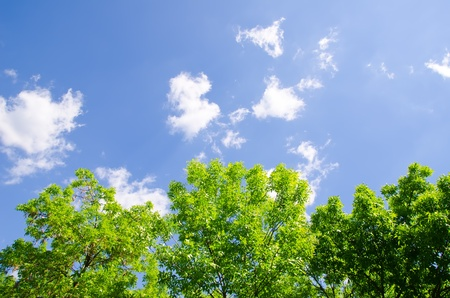 trees and sky with clouds Stock Photo - 9590157