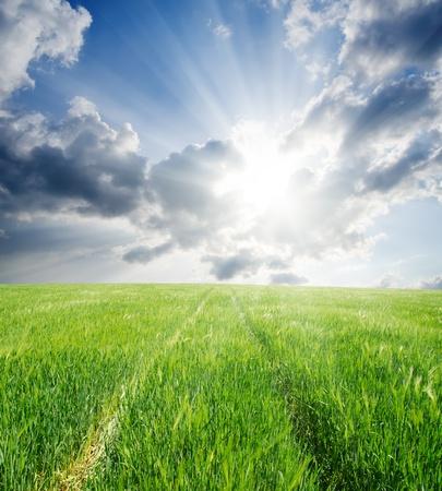 road in green barley under sun photo