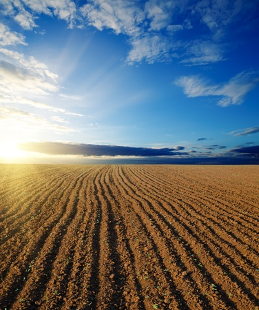 black ploughed field and sunset