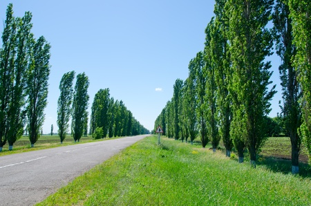 rural road with trees near it board photo