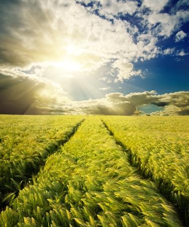 campo verde con carretera en sunset