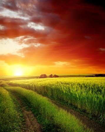 puesta de sol rojo sobre un camino rural cerca de campo verde Foto de archivo
