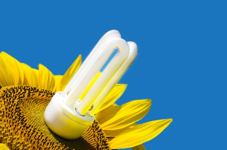 energy saving bulb and sunflower Stock Photo - 10043325