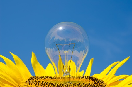 light bulb and sunflower photo