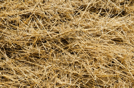 a straw: straw closeup as background Stock Photo