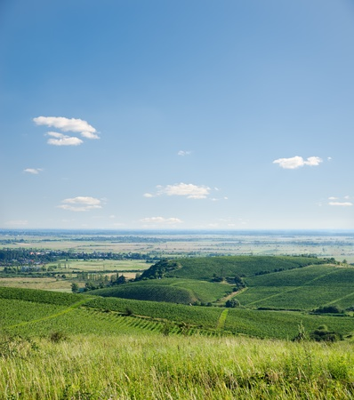 view to vineyards under blue sky with clouds photo