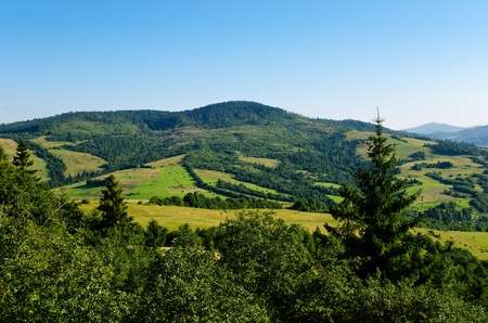 Beautiful green mountain landscape with trees in Carpathians photo