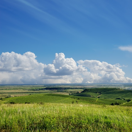 view to vineyard. Ukraine, Trans-carpathian Stock Photo - 10338135