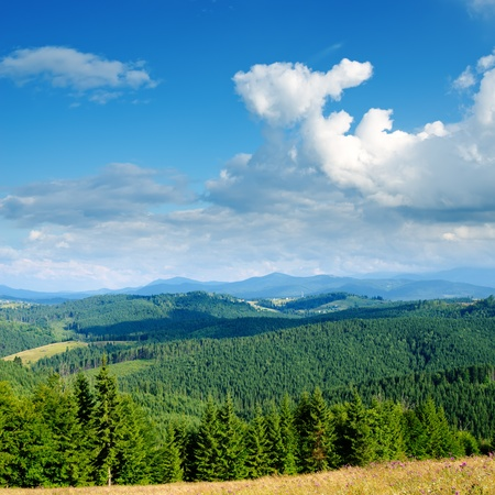carpathian mountains: Beautiful green mountain landscape with trees in Carpathians