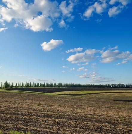 bright sky: black ploughed field under blue sky