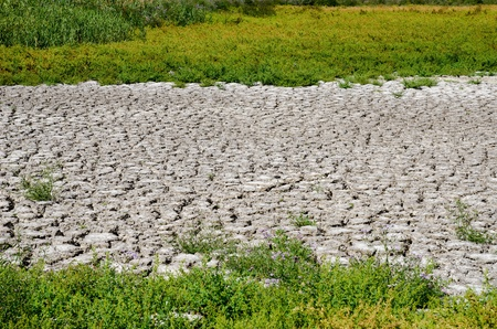 green grass around drought land photo