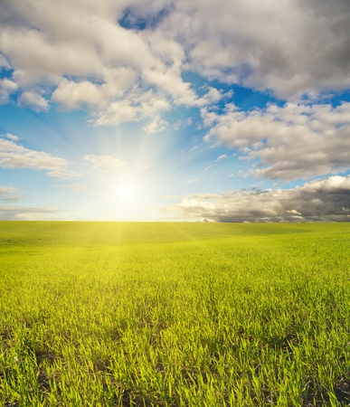 sun over green field Stock Photo - 11058359