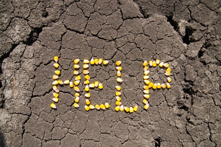 word HELP from grains of corn over cracked earth photo