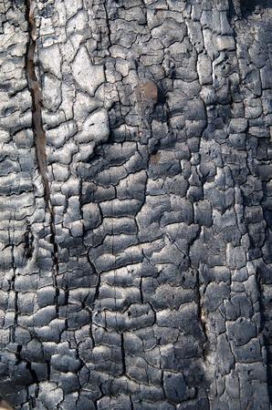 quemado: textura de la madera quemada
