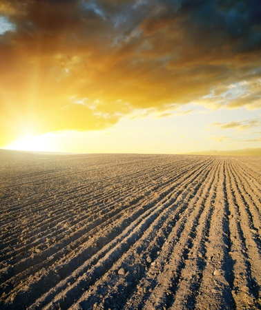ploughed field: agricultural black field and sunset Stock Photo