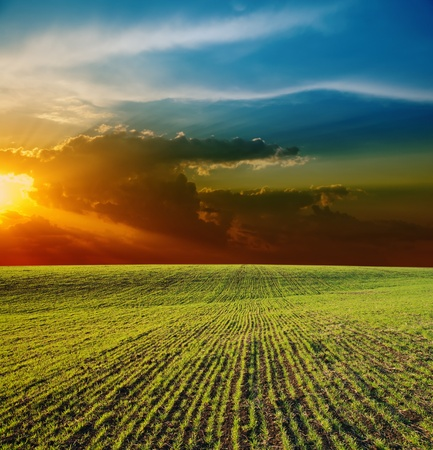 sunset over field with green grass photo