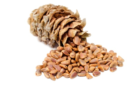 Cones and Nuts of Siberian Cedar Pine (Pinus sibirica) photo