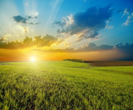 zonsondergang over landbouw groene veld