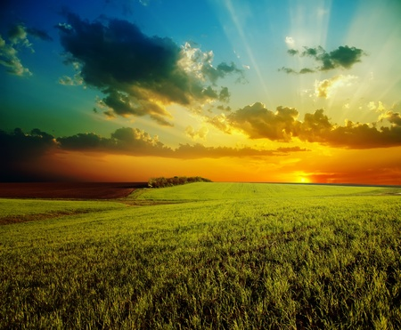 sunset with dramatic sky over agricultural green field photo