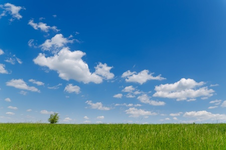 field with green grass under deep blue sky with clouds Stock Photo - 13029591