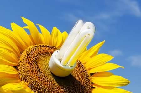 energy saving lamp in sunflower photo