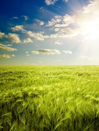 sunset over agricultural green field Stock Photo - 13232478