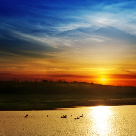 dramatic sunset over river with swans photo