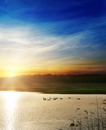 horizon over water: dramatic sunset over river with swans Stock Photo